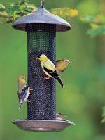Installez des mangeoires pour attirer les oiseaux!
